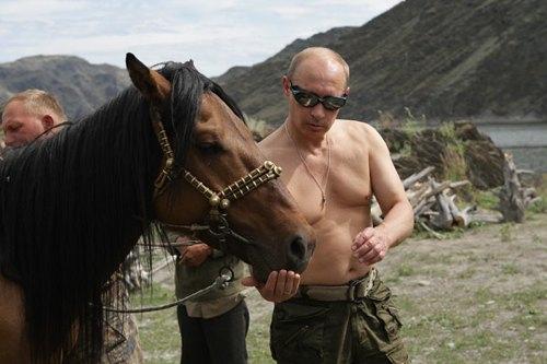 putin-topless-horse